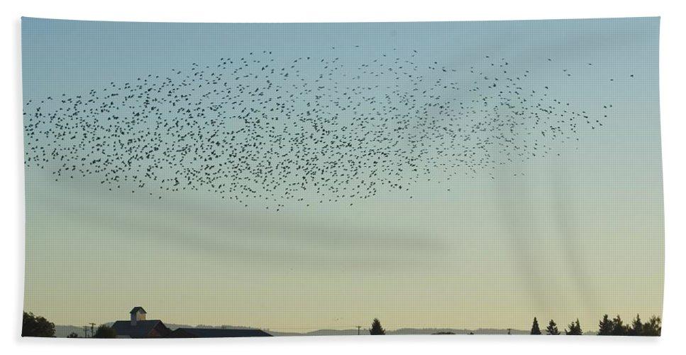 Bird Bath Sheet featuring the photograph Birds by Sara Stevenson