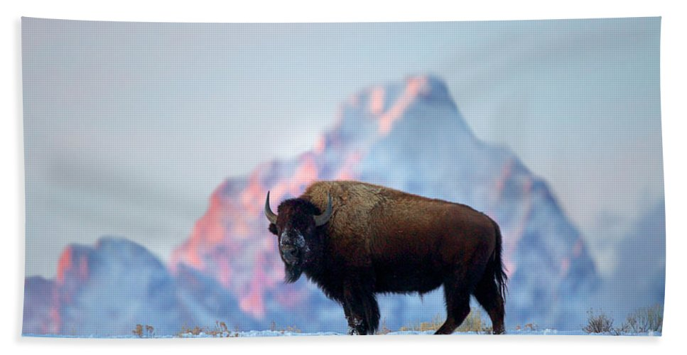 Bison Bath Sheet featuring the photograph Bison Mountain Sunset by Daryl L Hunter