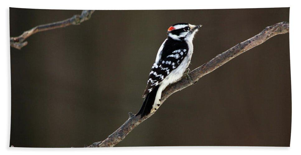 Downy Woodpecker Bath Sheet featuring the photograph Bit Of Red by Linda Kerkau