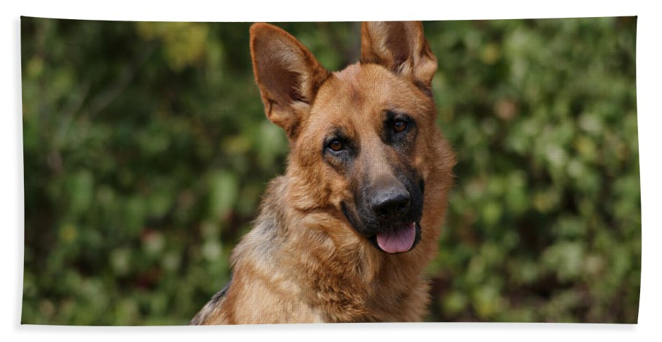 German Shepherd Dog Hand Towel featuring the photograph Black And Red German Shepherd Dog by Sandy Keeton