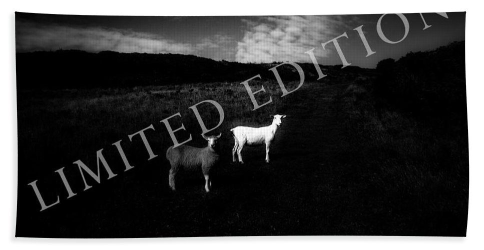 Sheep Hand Towel featuring the photograph Black And White by Dorit Fuhg