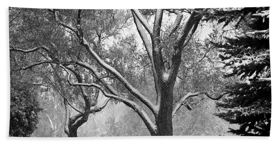 Nature Hand Towel featuring the photograph Black And White Snowy Landscape by James BO Insogna