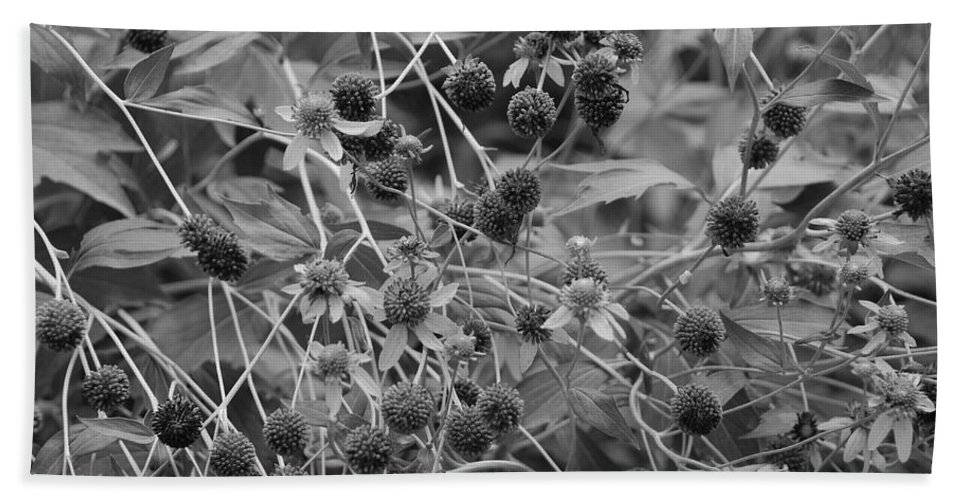 Black And White Bath Towel featuring the photograph Black And White Sun Flowers by Rob Hans