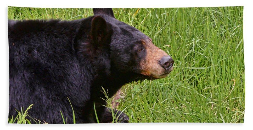 Black Bear Hand Towel featuring the photograph Black Bear by Kerri Farley