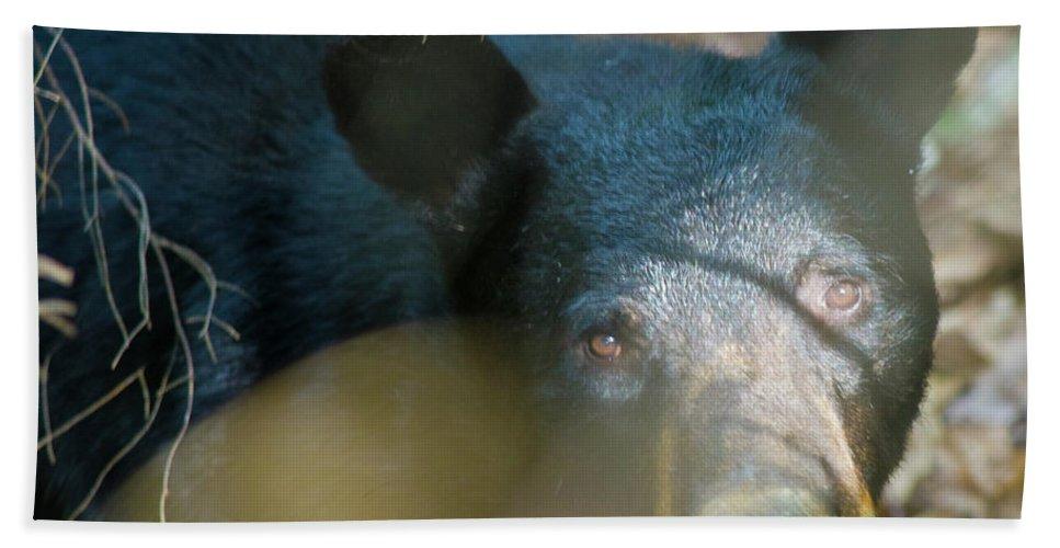 Black Bear Bath Sheet featuring the photograph Black Bear Oh My by Betsy Knapp