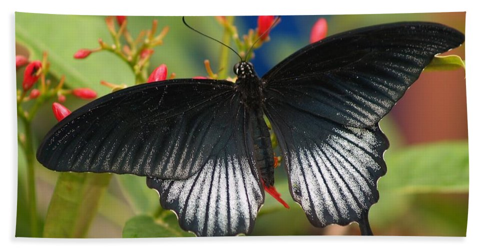 Butterfly Hand Towel featuring the photograph Black Beauty by Gaby Swanson