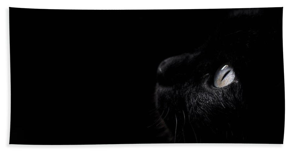 Black Bath Sheet featuring the photograph Black Beauty by Laura Melis
