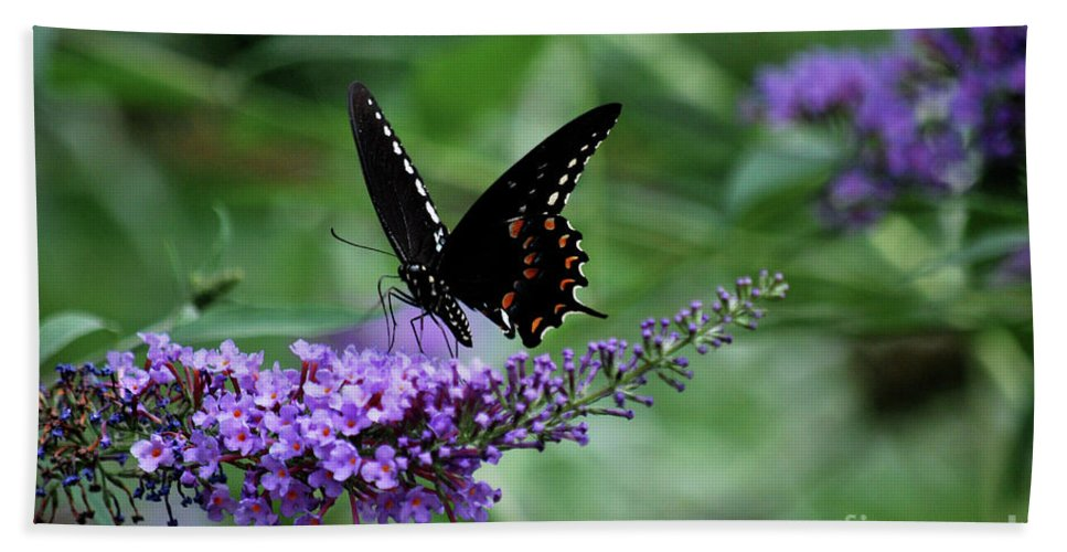 Butterfly Hand Towel featuring the photograph Black Butter by Lori Tambakis