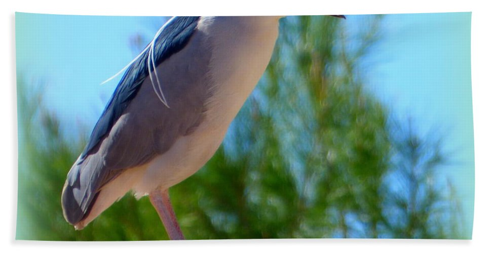 Black Bath Sheet featuring the photograph Black Crowned Night Heron On Roof by Teresa Stallings