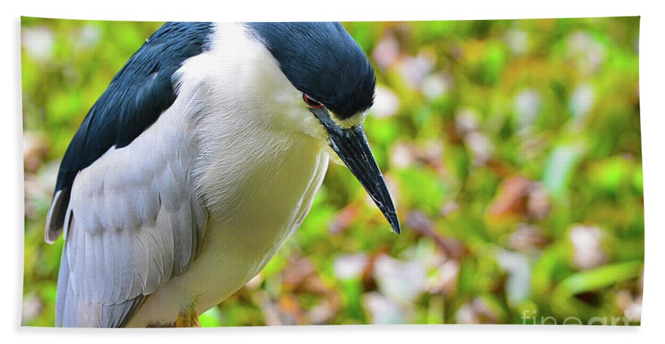 Bird Bath Towel featuring the photograph Black-crowned Night Heron by Spade Photo