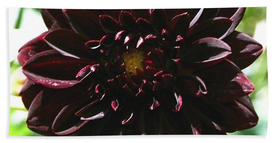 Flower Bath Sheet featuring the photograph Black Dalia by Dean Triolo