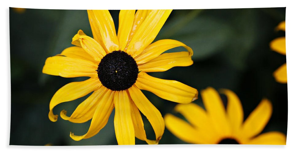 Black Eyed Susan Bath Towel featuring the photograph Black Eyed Susan by Marilyn Hunt
