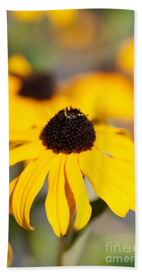 Black Eyed Susan Bath Sheet featuring the photograph Black Eyed Susan One by Brooke Roby