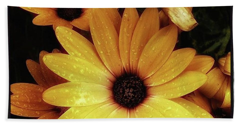 Flowers Bath Towel featuring the photograph Black Eyed Susans. Looks Like They're by Mr Photojimsf