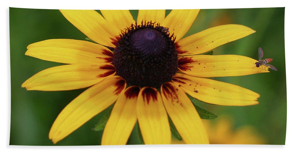 Flower Bath Sheet featuring the photograph Black Eyes Susan And Friend by Smilin Eyes Treasures