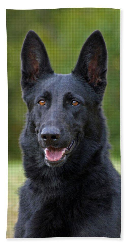 German Shepherd Bath Sheet featuring the photograph Black German Shepherd Dog by Sandy Keeton