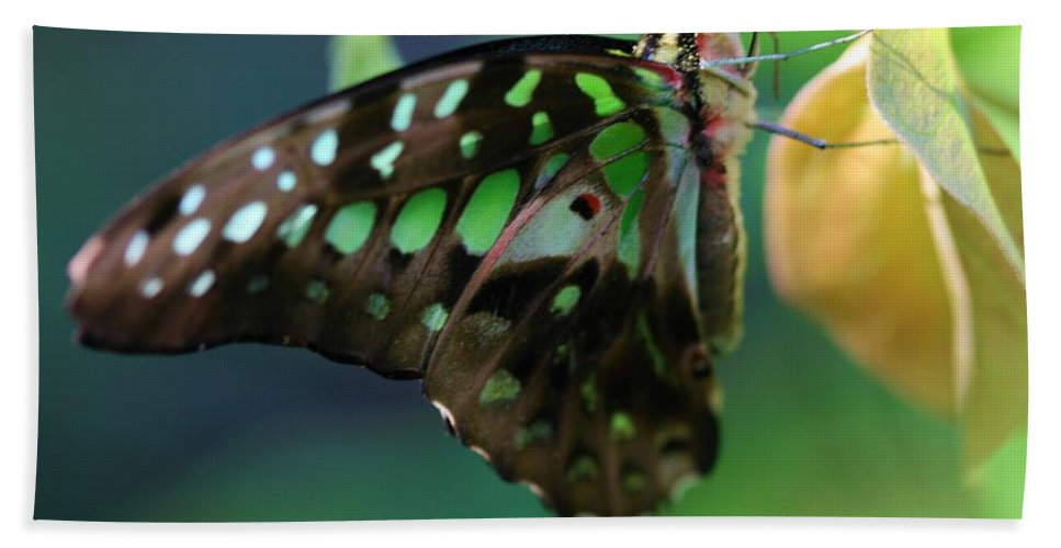 Butterfly Bath Sheet featuring the photograph Black Green Tailed Jay 2 by Kristina Jones
