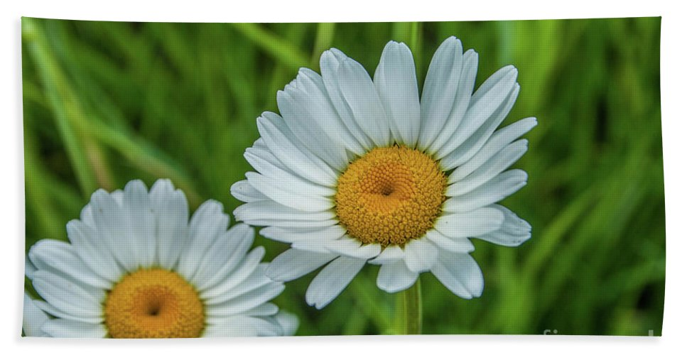 Flower Hand Towel featuring the photograph Black-headed Daisy's by Tony Baca