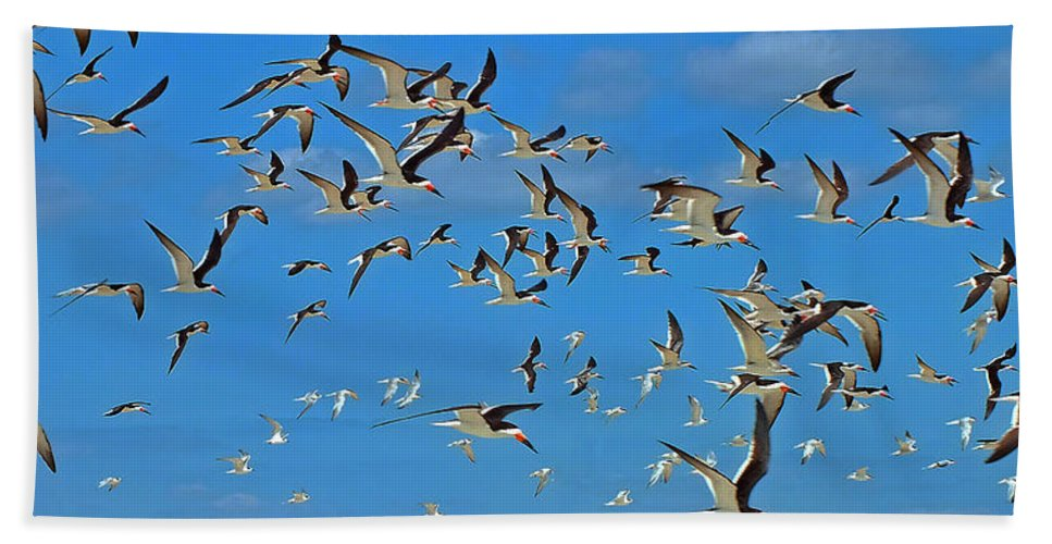 Black Skimmer Hand Towel featuring the photograph The Black Skimmers by William Walker