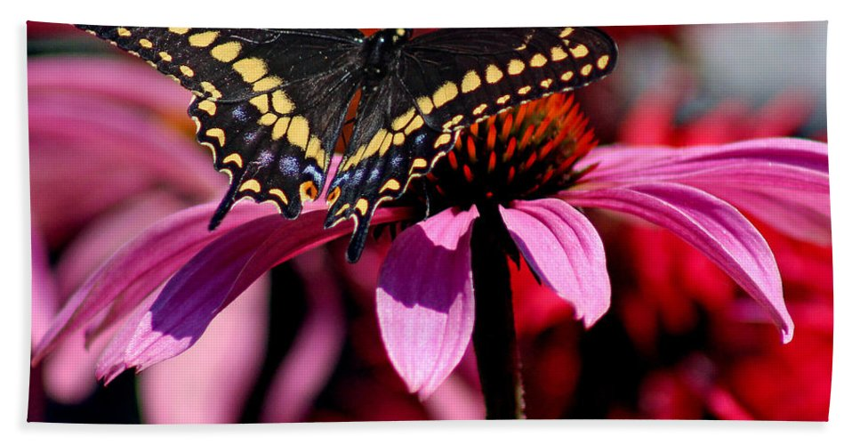 Insect Bath Sheet featuring the photograph Black Swallowtail Butterfly On Coneflower Square by Karen Adams