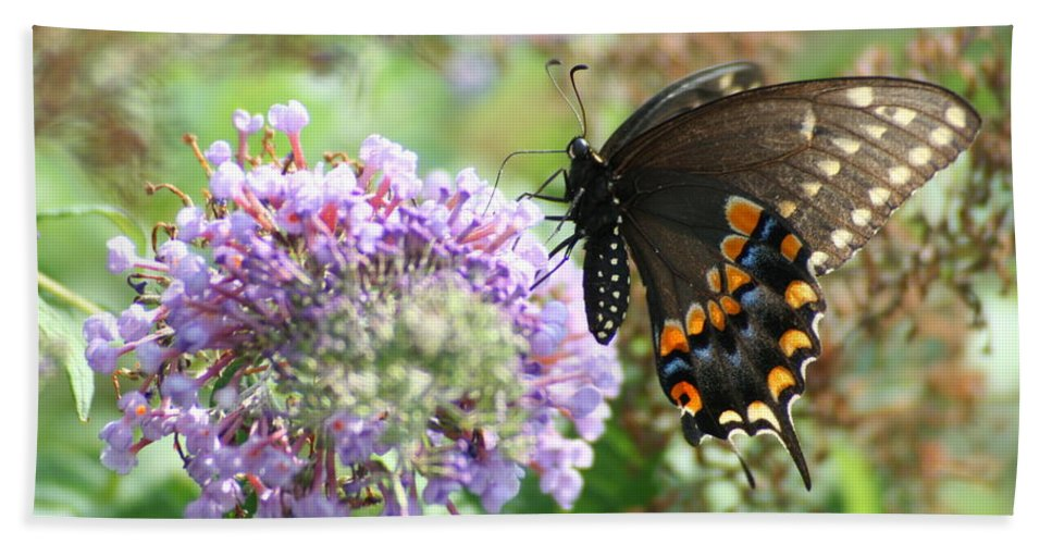 Black Hand Towel featuring the photograph Black Swallowtail by Tammy Finnegan