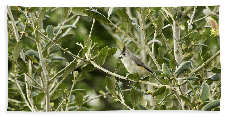 Nature Hand Towel featuring the photograph Black Titmouse by Marshall Barth