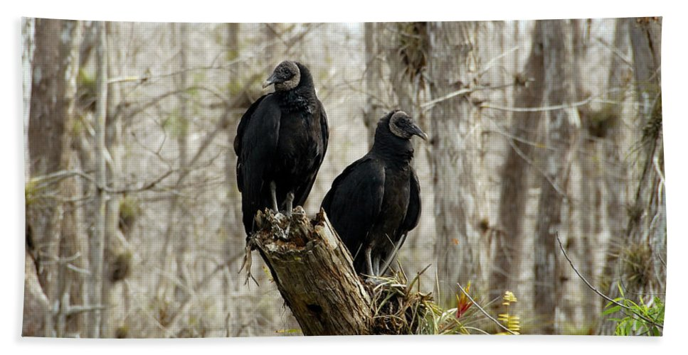 Black Vultures Bath Sheet featuring the photograph Black Vultures by David Lee Thompson