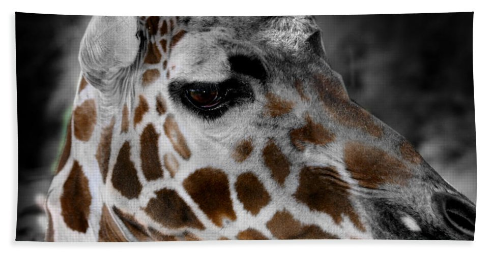 Giraffe Hand Towel featuring the photograph Black White And Color Giraffe by Anthony Jones
