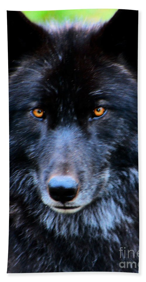 Wolf Hand Towel featuring the photograph Black Wolf by Nick Gustafson
