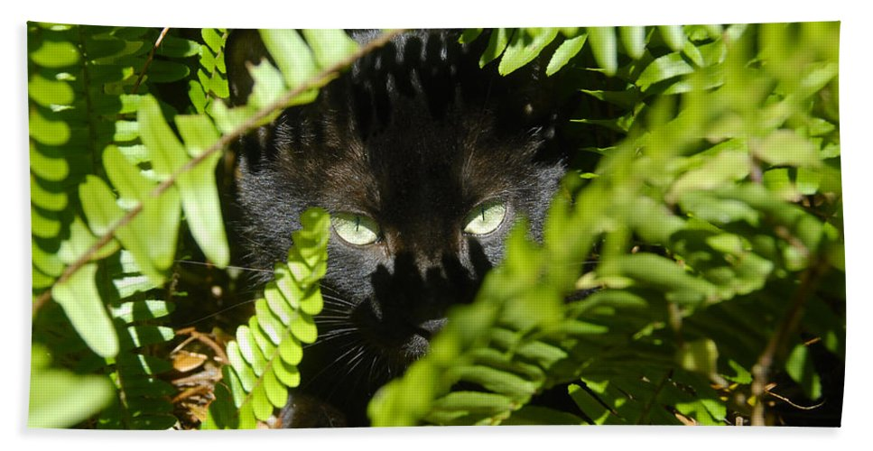 Cat Bath Sheet featuring the photograph Blackie In The Ferns by David Lee Thompson