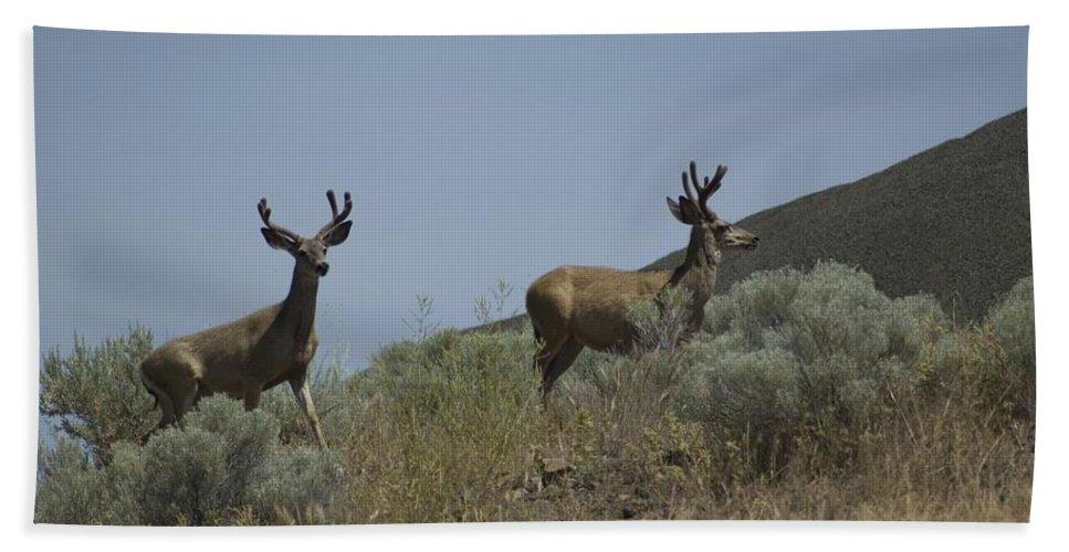 Buck Bath Sheet featuring the photograph Blacktail Deer 3 by Sara Stevenson