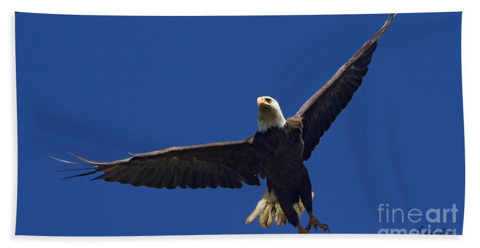 Bird Hand Towel featuring the photograph Blad Eagle In Flight-signed- #2699 by J L Woody Wooden