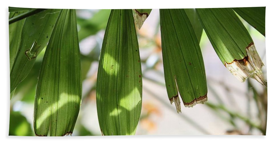 Nature Hand Towel featuring the photograph Blades by Todd Blanchard