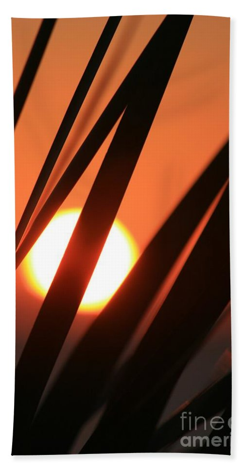 Sun Hand Towel featuring the photograph Blazing Sunset and Grasses by Nadine Rippelmeyer