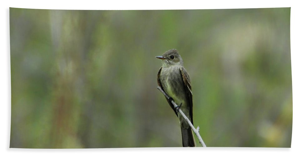 Bird Bath Sheet featuring the photograph Blending In by Donna Blackhall