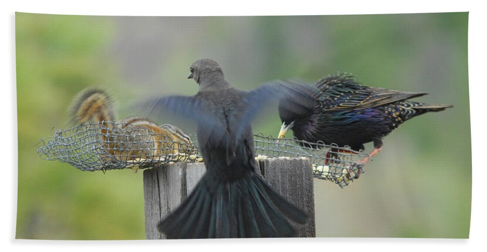 Bird Hand Towel featuring the photograph Bless This Meal by Donna Blackhall