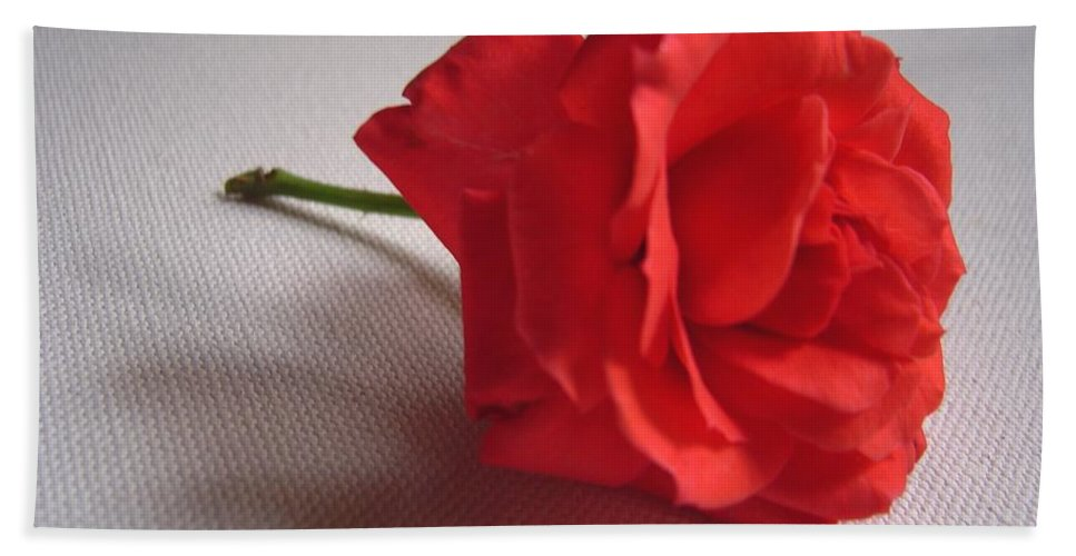 Blood Bath Towel featuring the photograph Blood Red Rose by Usha Shantharam