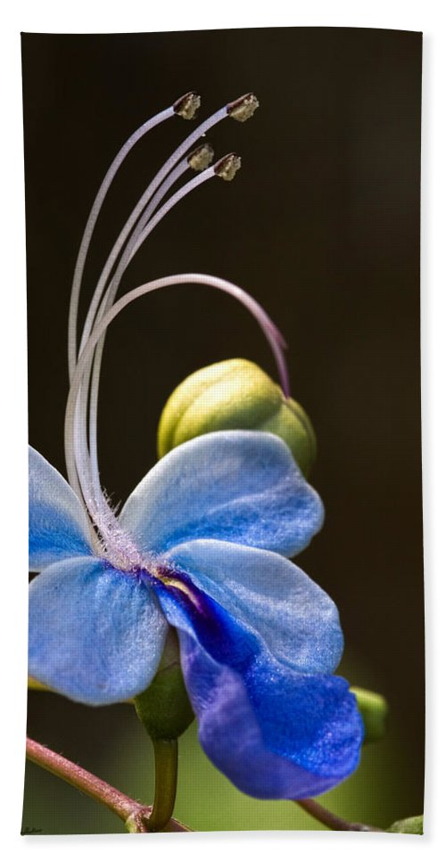 Flower Bath Towel featuring the photograph Blooming Butterfly by Christopher Holmes