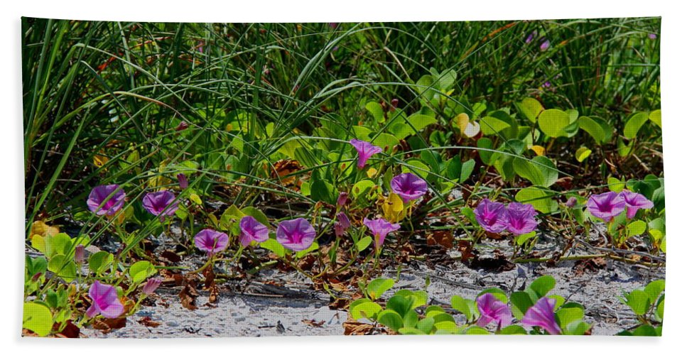 Cross Vines Bath Towel featuring the photograph Blooming Cross Vines Along The Beach by Barbara Bowen