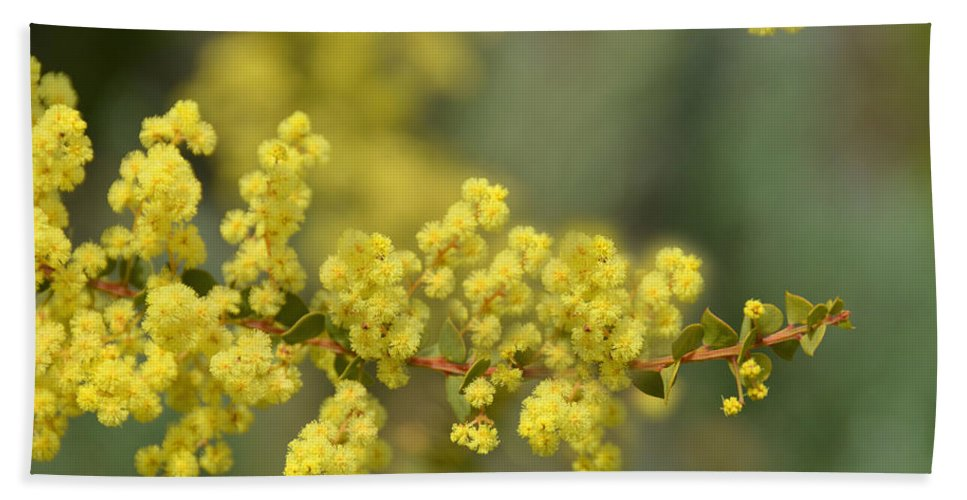 Shrub Hand Towel featuring the photograph Blooming In Yellow by Lena Photo Art