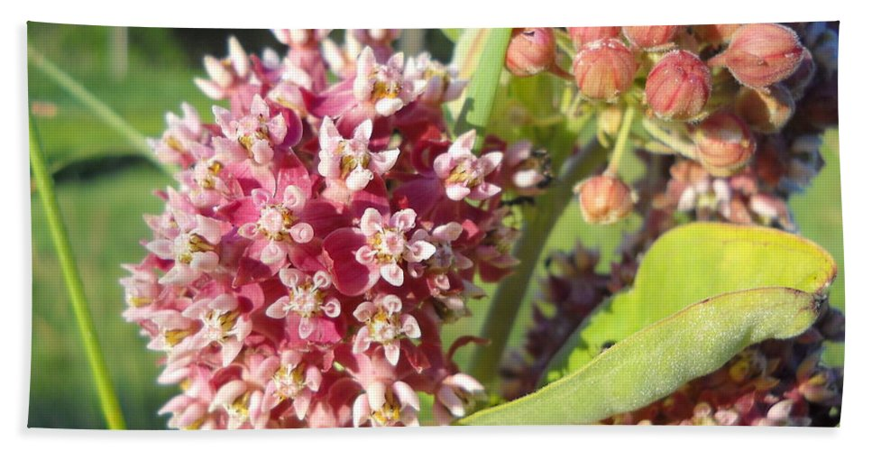 Close Up Hand Towel featuring the photograph Blooming Milkweed Flowers by Kent Lorentzen