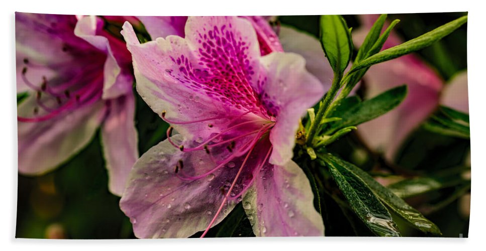 Plant Hand Towel featuring the photograph Blooming Wet by Elvis Vaughn