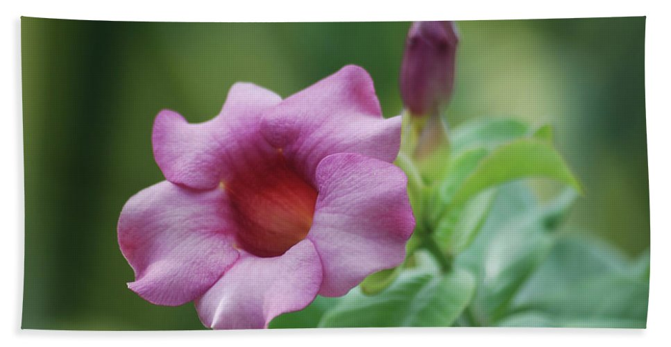 Flower Hand Towel featuring the photograph Blossom Of Allamanda by Michael Peychich