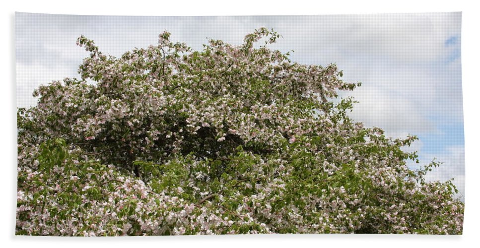 Tree Bath Sheet featuring the photograph Blossoming Tree by Michelle Miron-Rebbe