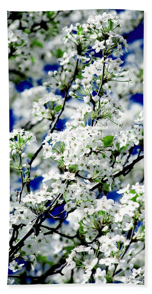 Flowers Hand Towel featuring the photograph Blossoms by Greg Fortier