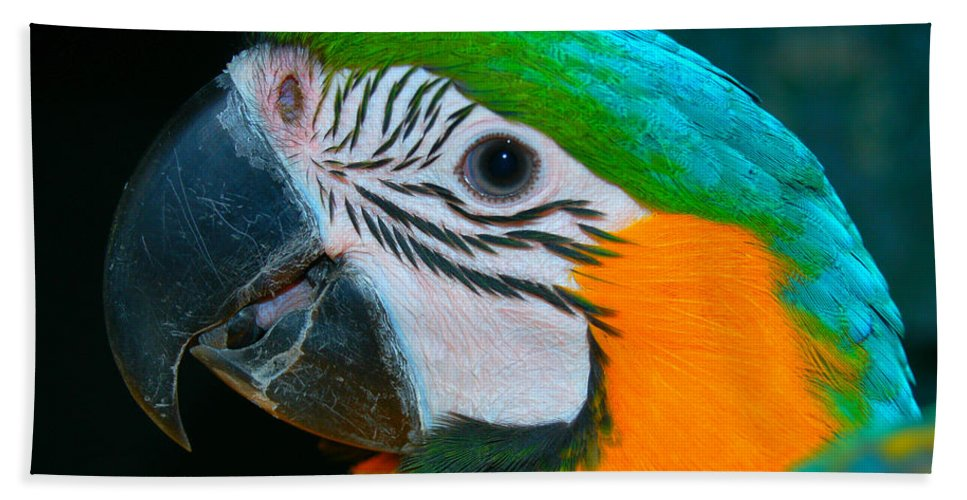 Blue Hand Towel featuring the photograph Blue And Gold Macaw Headshot by David Anderson