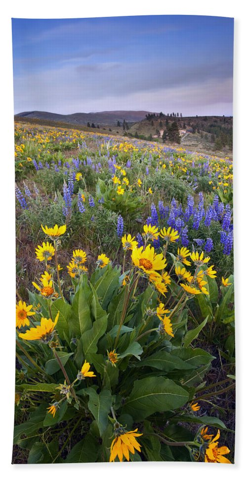 Lupine Hand Towel featuring the photograph Blue And Gold by Mike Dawson
