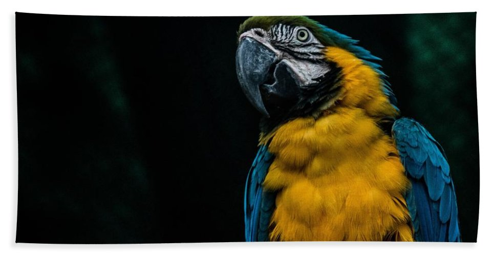 Parrot Hand Towel featuring the photograph blue and yellow Macaw by FL collection