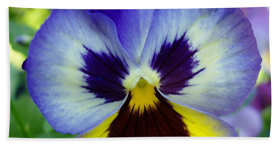 Flowers Hand Towel featuring the photograph Blue And Yellow Pansy by Nancy Mueller