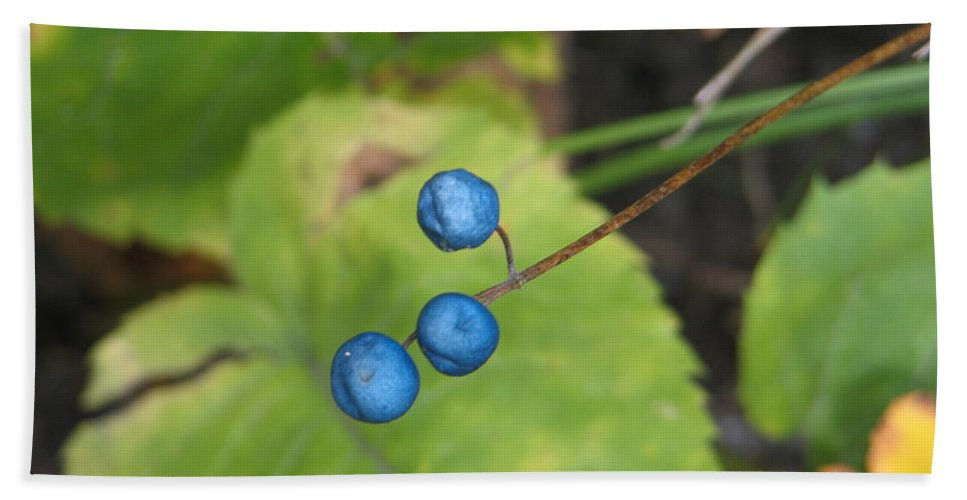 Blue Hand Towel featuring the photograph Blue Berries by Kelly Mezzapelle